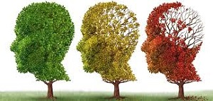 300 pixels alzheimersnewstoday.com brains as trees