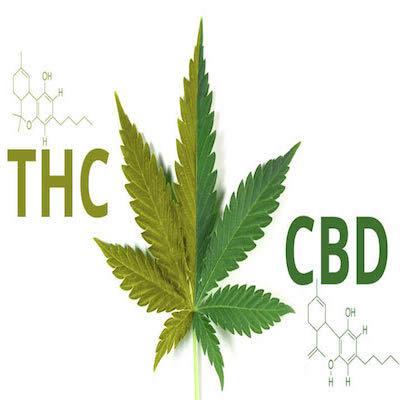FEATURED greenrushdaily-CBD-vs-THC