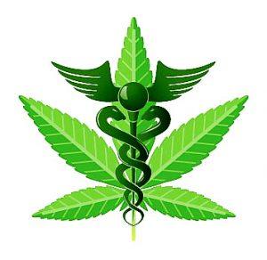 cannabis-cadusius