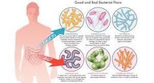 gutbacteria