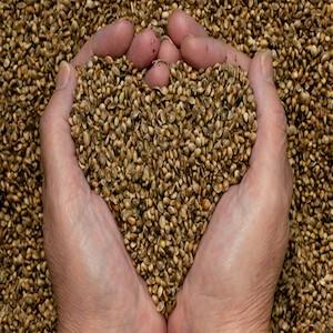 thyme-for-hemp-seeds-hands3-e1418154406147